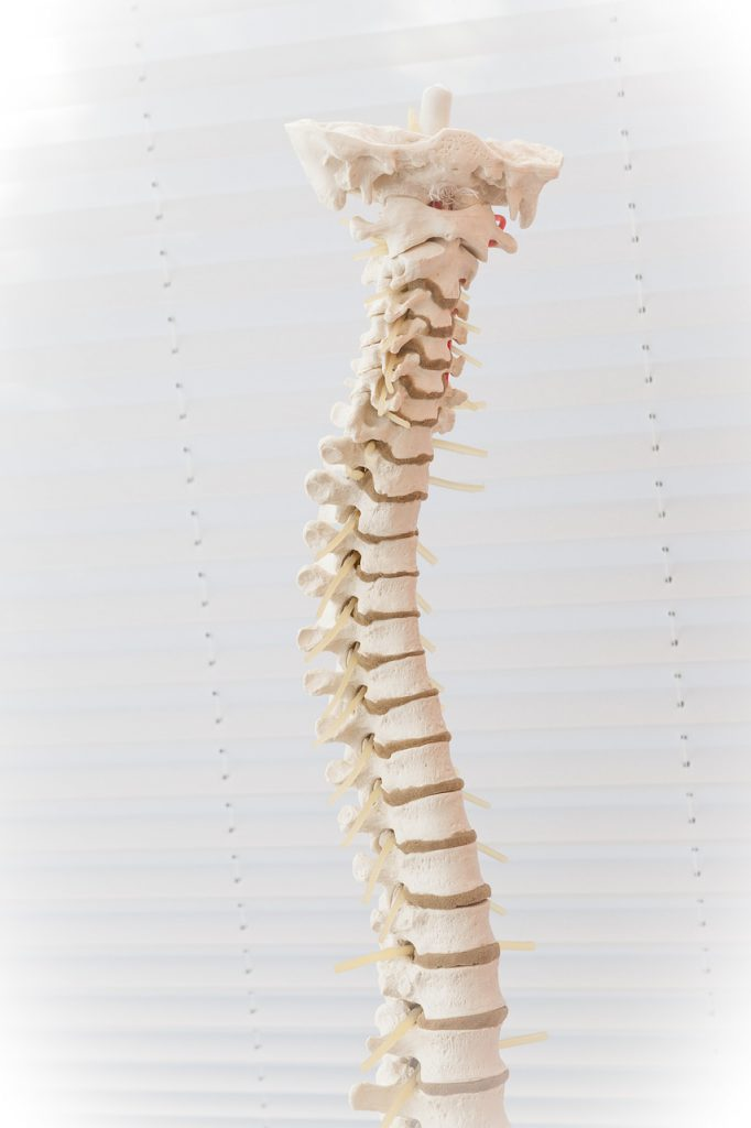 Wirbelsäule Skelett